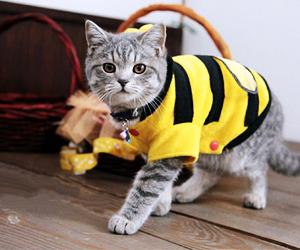 disfraz-de-abeja-para-mascotas