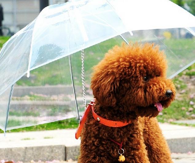 paraguas-para-perros