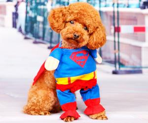 disfraz-superman-perros